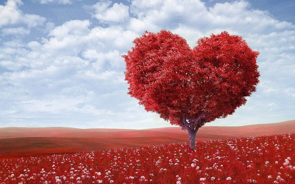 San Valentino: Perché si festeggia il 14 febbraio? Qual è la sua storia e perché si regalano le rose?